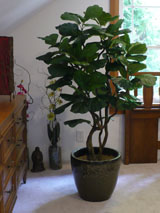 Silkscape Design Artificial Trees And Plants Seattle